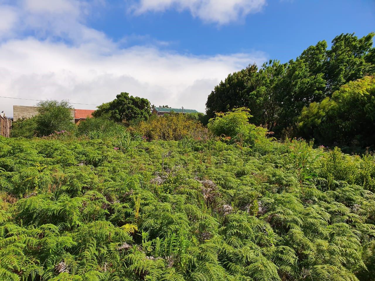 Land in Pringle Bay For Sale