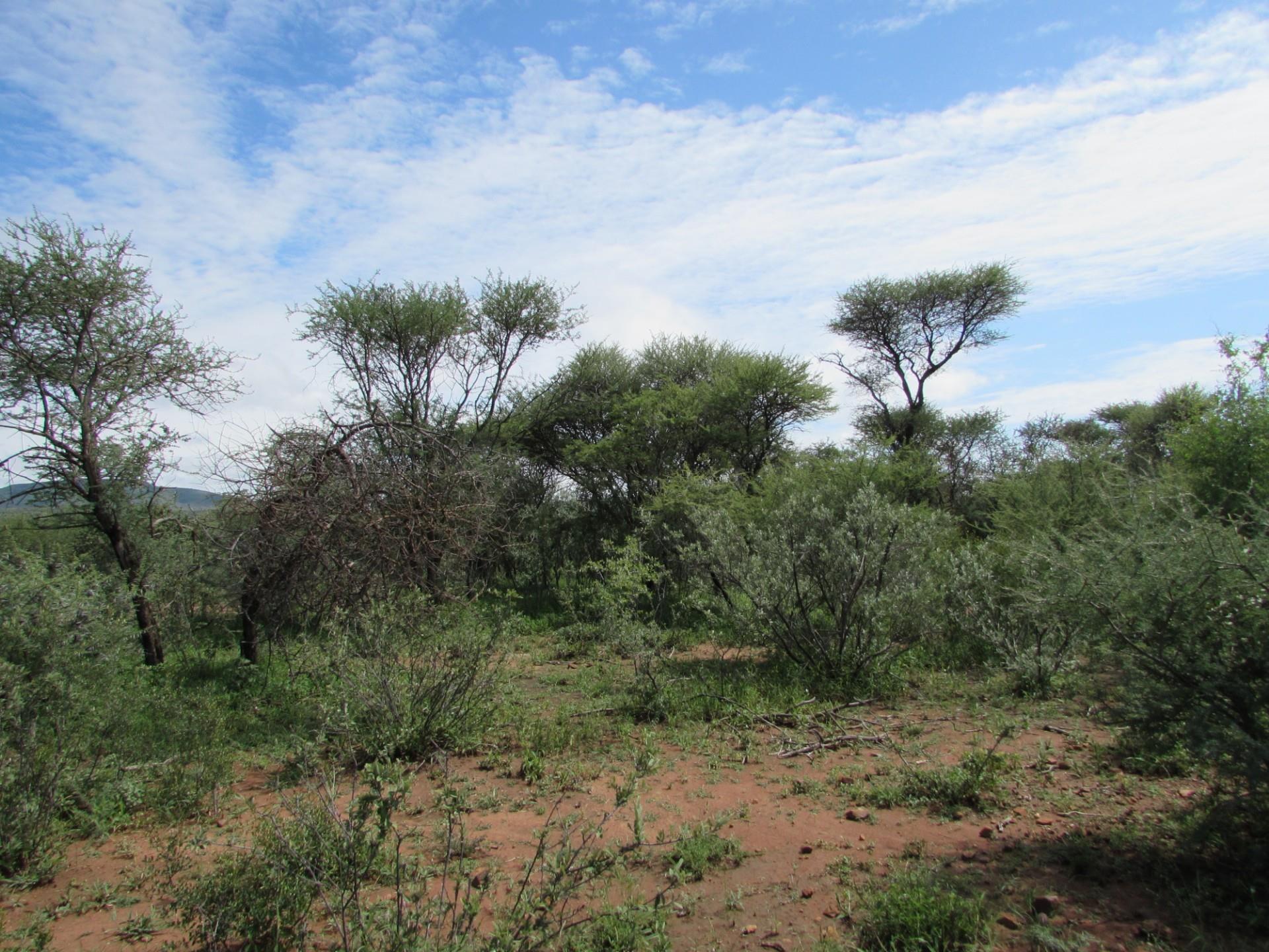 Vacant Land / Plot in Lion Park For Sale