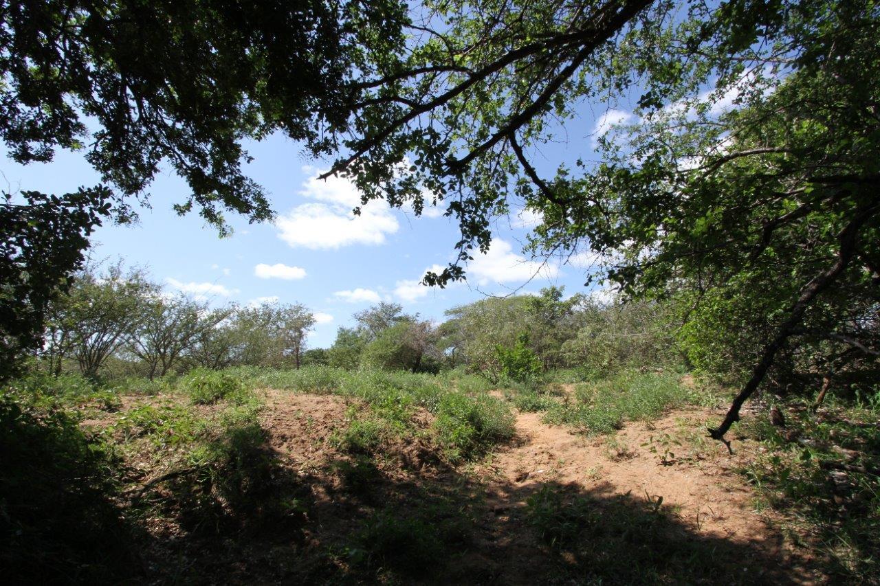Land in Zandspruit Bush & Aero Estate For Sale