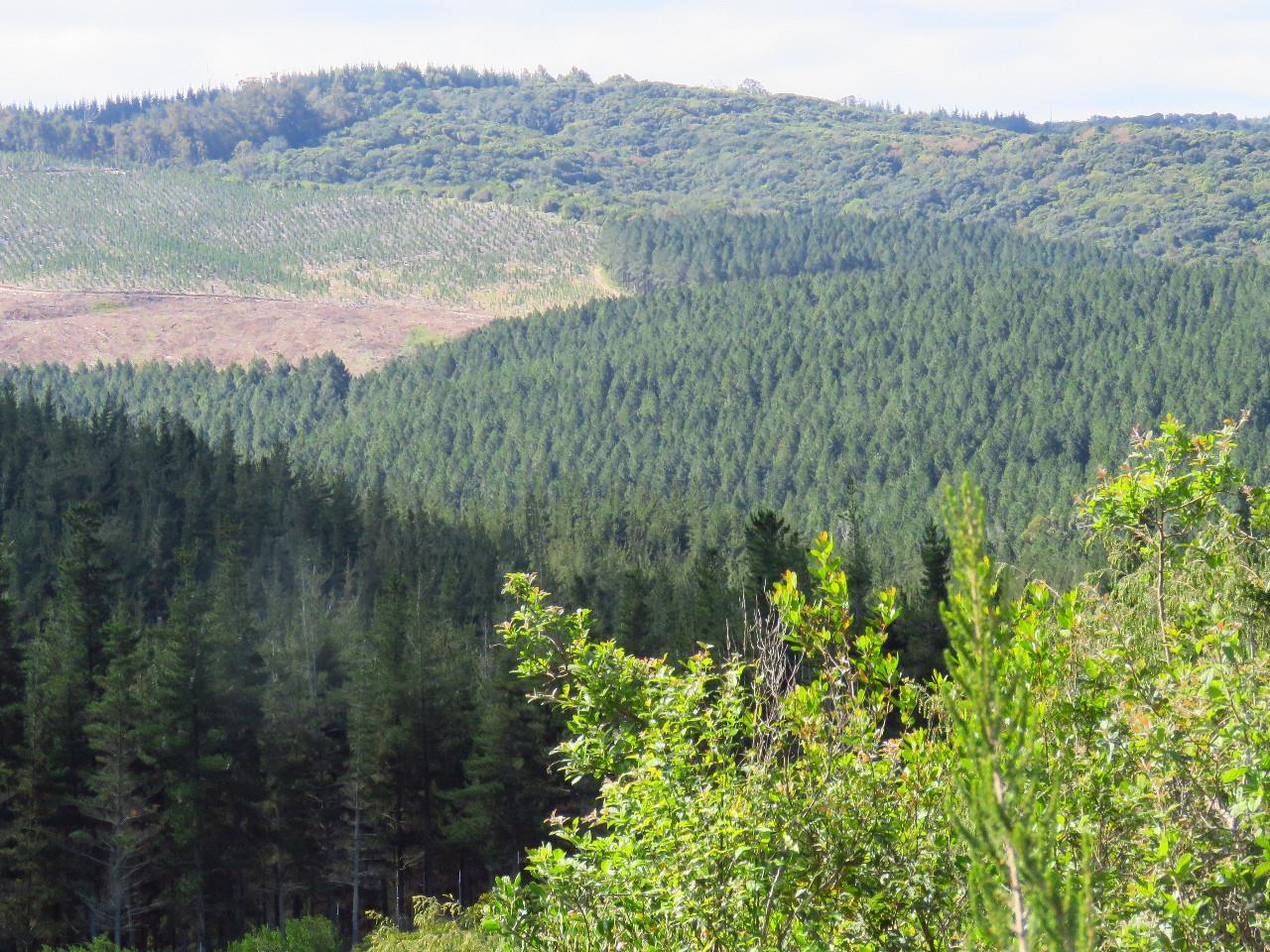 Vacant Land / Plot in Pezula Private Estate For Sale
