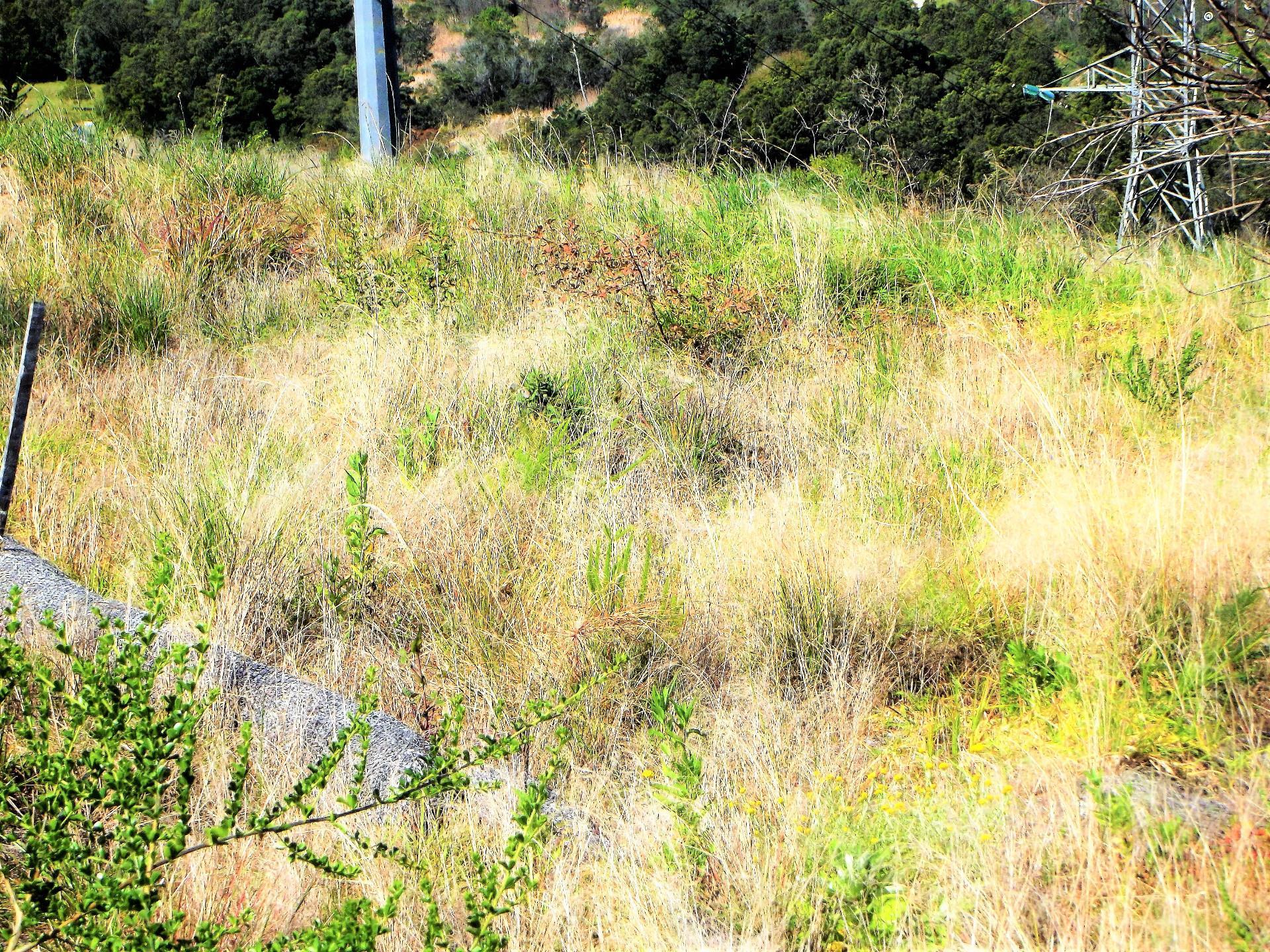 Land in Eastford Glen For Sale