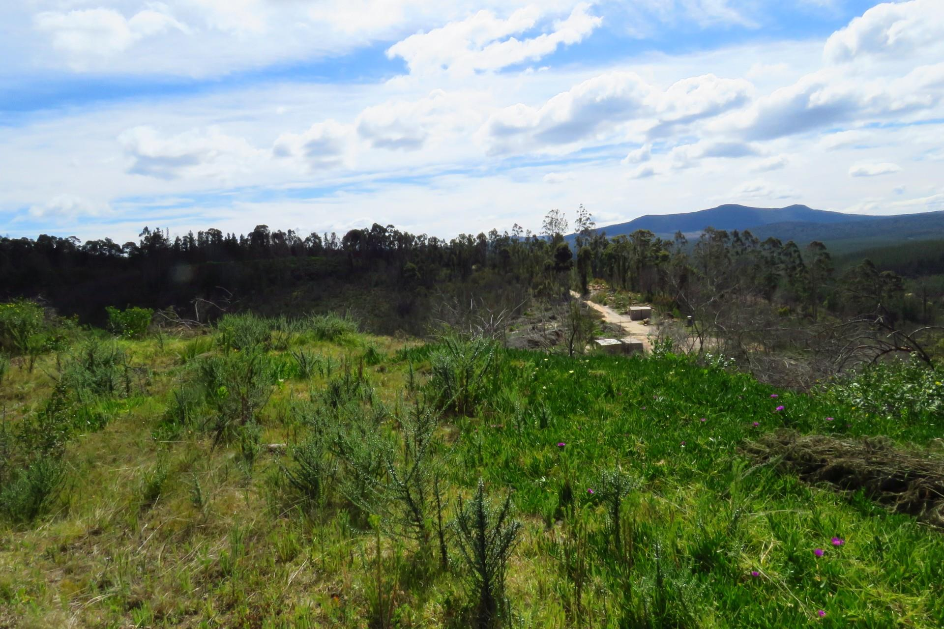 Land in Knysna Rural For Sale