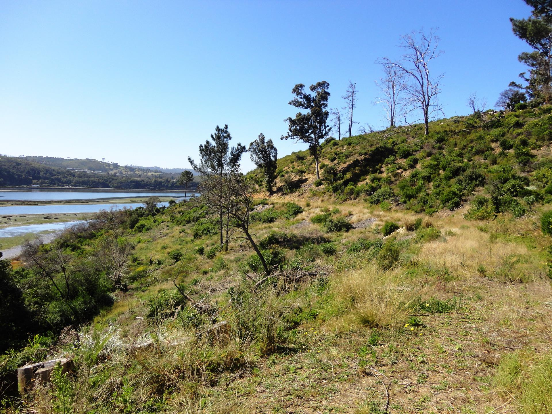 Land in Belvidere Estate For Sale