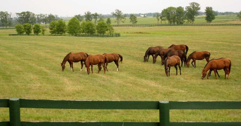 Langebaan, Long Acres Country Estate Property  | Houses For Sale Long Acres Country Estate, Long Acres Country Estate, Vacant Land  property for sale Price:1,410,000