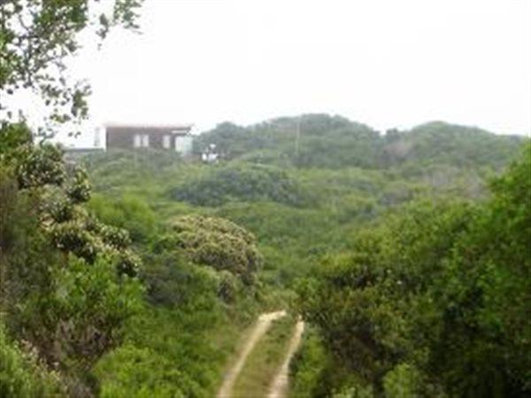Wilderness - ZAF (photo 2)