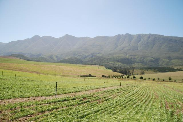 Swellendam Rural, Swellendam - ZAF (photo 2)