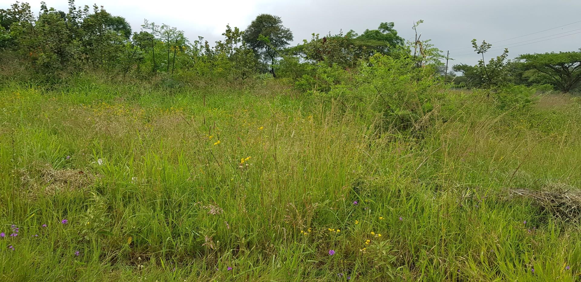 Vacant Land / Plot in Louis Trichardt For Sale