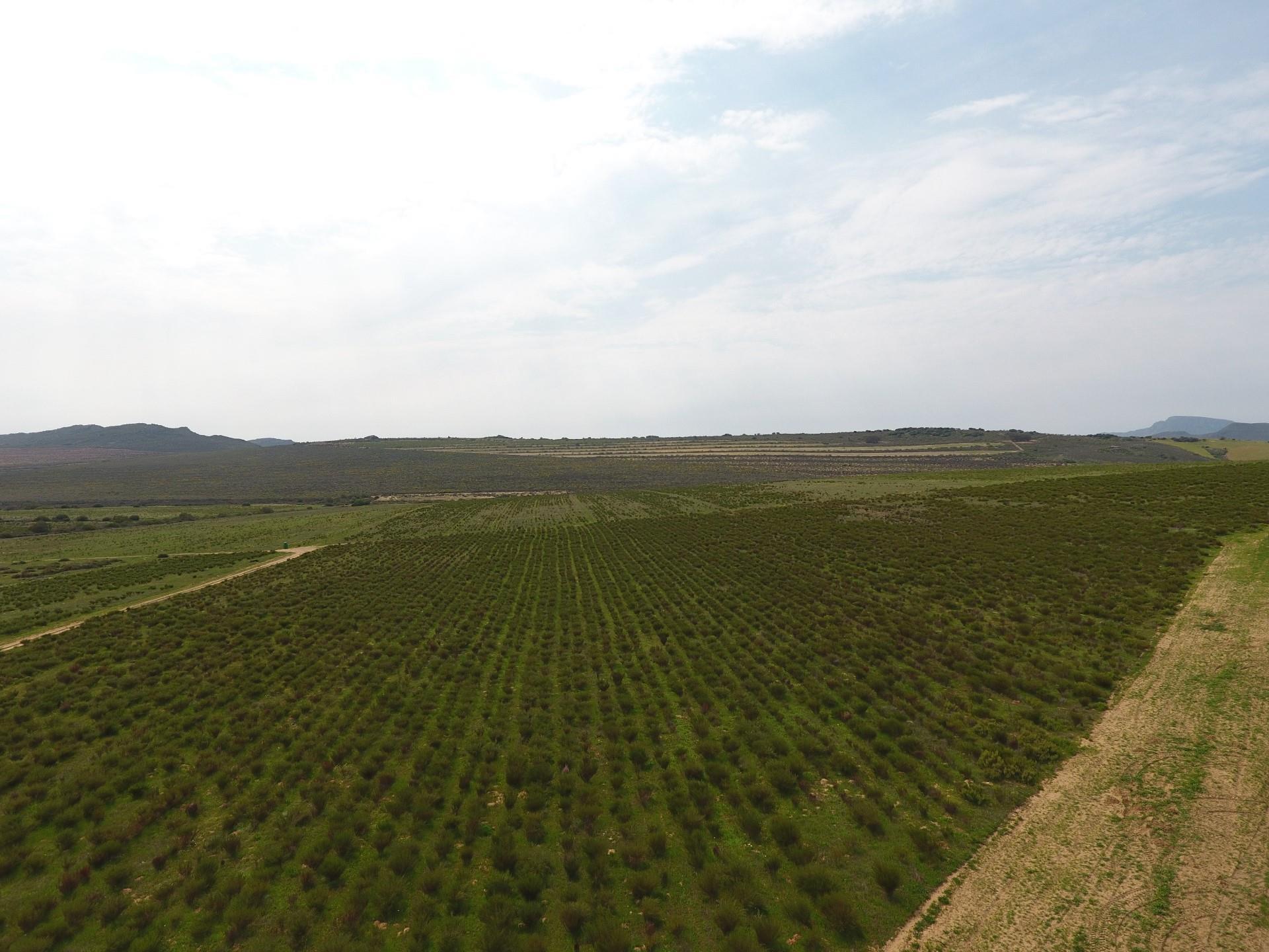Farm in Piketberg Rural For Sale