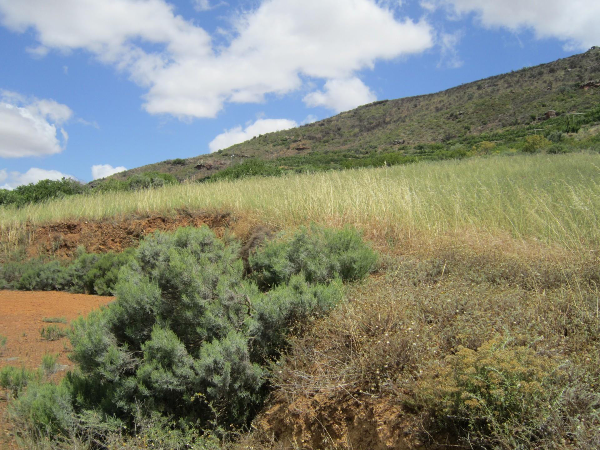 Vacant Land / Plot in Riebeek Kasteel For Sale
